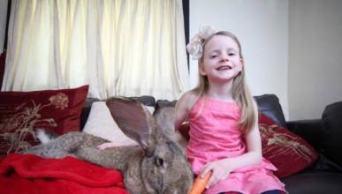 Най-големият заек в света