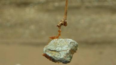 За мравките и хората