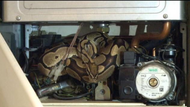 Жена откри неканен гост в дома си