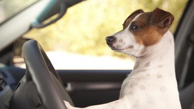 Жена спечели 140 000 долара от катастрофа с куче