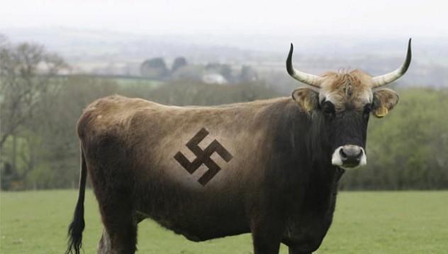 Любимата порода крави на Хитлер е опасна