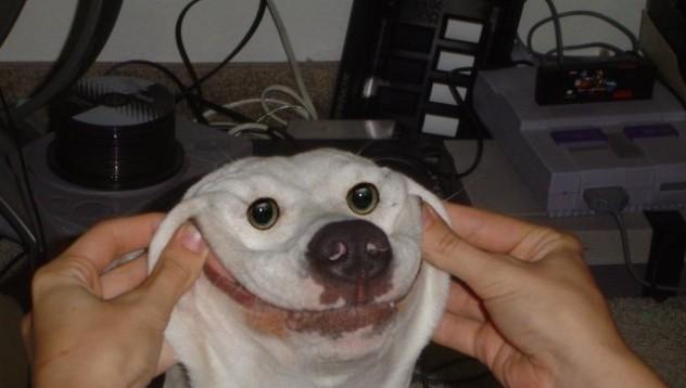 Кучетата разпознават настроението Ви