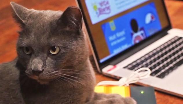 Подгряваща клавиатура за котката
