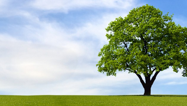 Жена планира да се омъжи за дърво