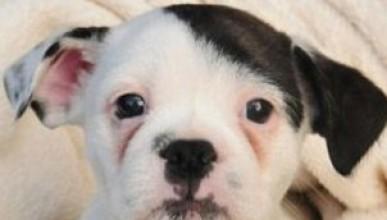Кученце с визията на Хитлер