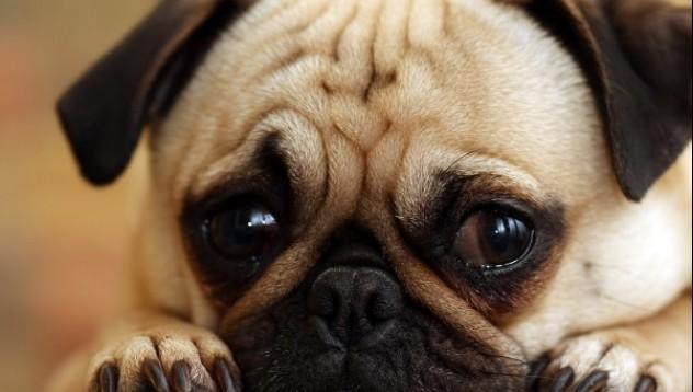 Защо се привързваме към кучетата