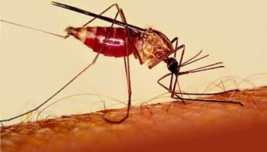 Учени откриха ефективна ваксина за борба с маларията