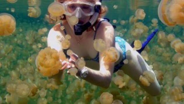Да скочиш в езеро с медузи