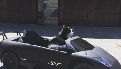 DeadMa5s купи Lamborghini на котката си