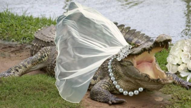 Кмет се ожени отново за крокодил