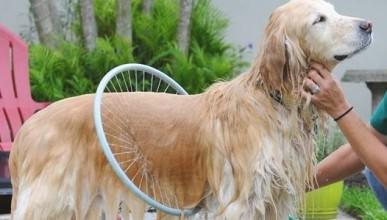 Душ за бързо почистване на кучето