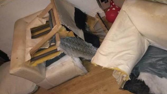 Жена сряза собствения си диван