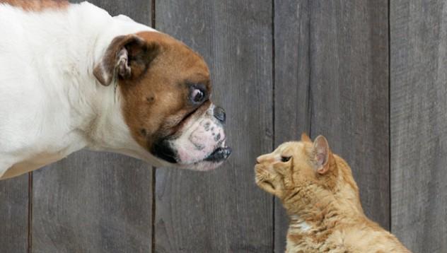 Кое животно обича повече стопанина си