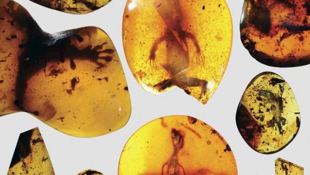 Откриха гущер на 99 милиона години