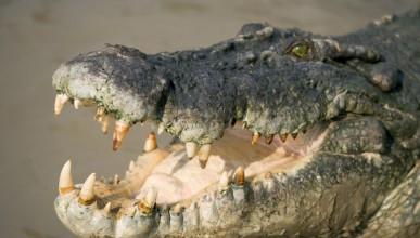 Крокодили охраняват склад с наркотици