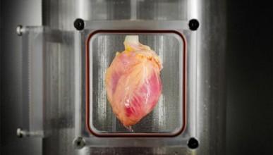 Учени успяха да изградят мускулната тъкан на сърцето