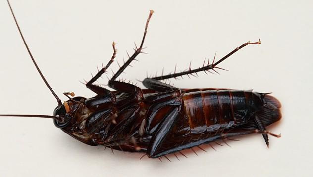 Хлебарките ще оцелеят дори и след взрив на дома
