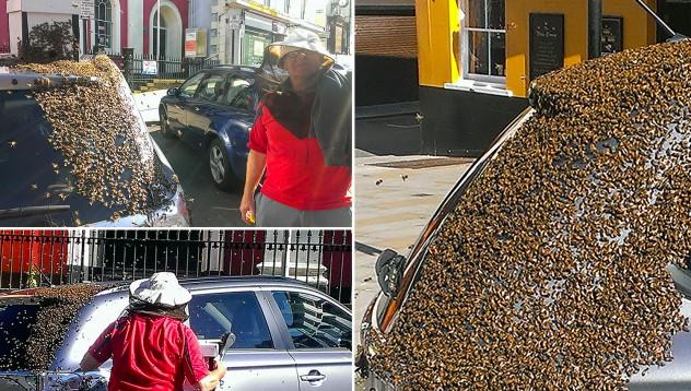 Жена превърна колата си в кошер