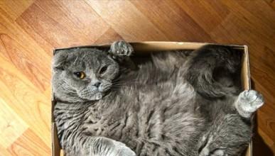 Защото котките обичат празните кутии
