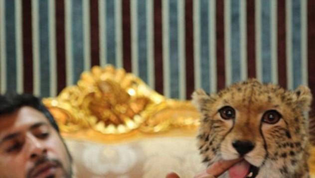 Милионерът, който гледа цял зоопарк