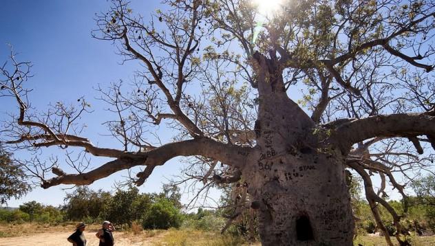 Най-странният затвор в света е дърво