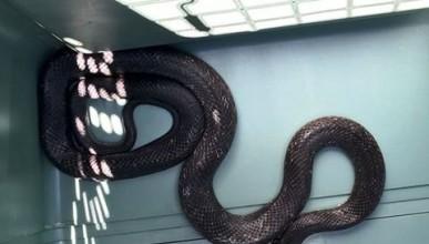 Да се возиш със 120-сантиметрова змия