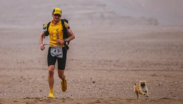 Бегач на дълги разстояния осинови кучето, което го следва цели 250 километра