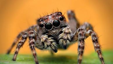 Паяците имат много добър слух и знаят кога идваш към тях