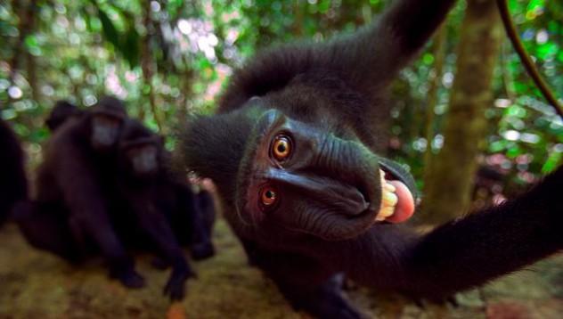 Тези маймуни са майстори на селфита