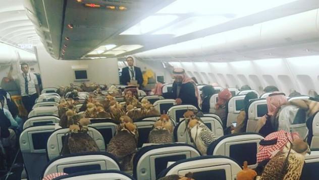 Саудитски принц превози 80 сокола в първа класа