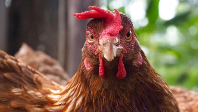 Ферма продава пилета на наркотици