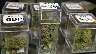 Компания купува цял град, за да отглежда марихуана