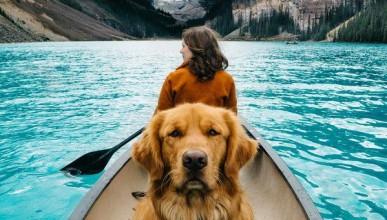 Приликата между бездомното куче и свободната жена