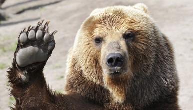 Руснак вози мечка в колата