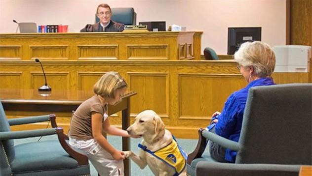 САЩ използва терапевтични кучета в съда