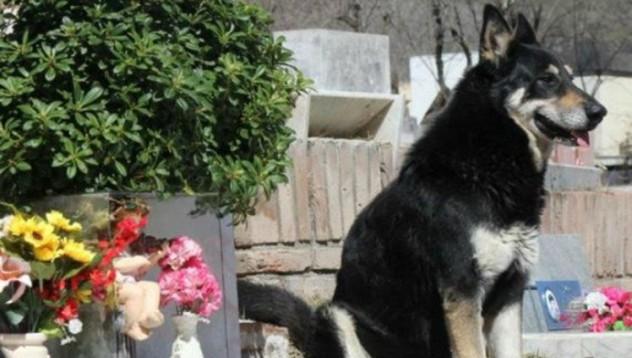 Аржентинско куче посещава гроба на стопанина си в продължение на 11 години