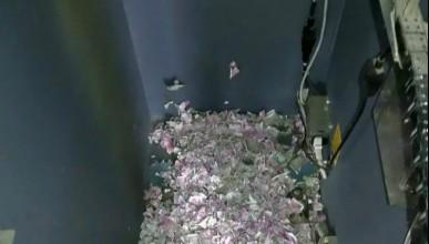 Мишка изяде повече от 10 000 долара