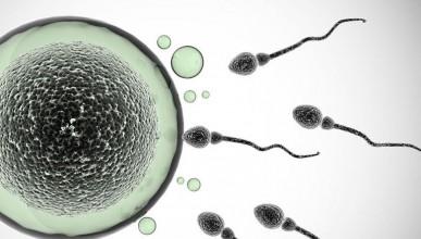 Пиячите имат повече сперматозоиди от останалите