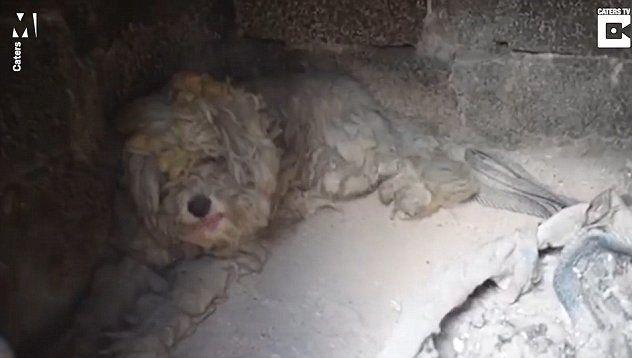 Куче се спасило от пламъците в пещ