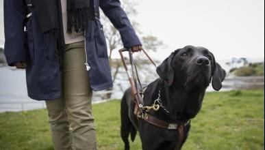 Отнеха кучето-водач на слепец