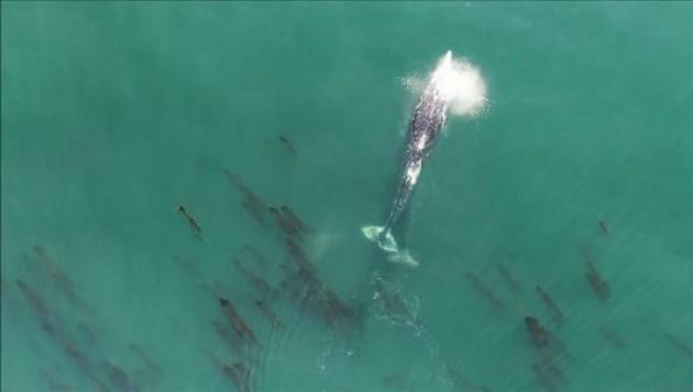 Ето как синият кит изпуска душата