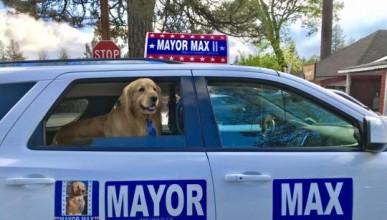 В Калифорния имат куче-кмет