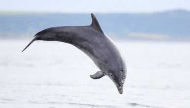 Делфин тероризира цяло село