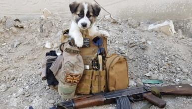 Кучето, което пропътува 3000 мили, за да се върне при стопанина си