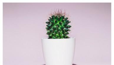 Бодливи растения и депресиращи книги са причината за самотата
