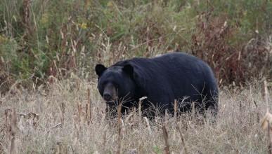 3-годишно момче прекарало 2 дена с кафява мечка