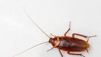 Мъж се опита да застреля хлебарка