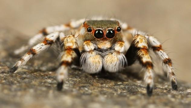 Зет си взе тарантула, за да пъди тъщата