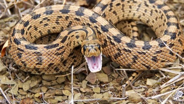 Мъж ухапа змия