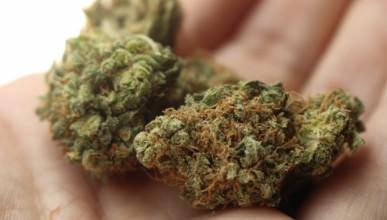 Люксембург обмисля пълно легализиране на марихуаната